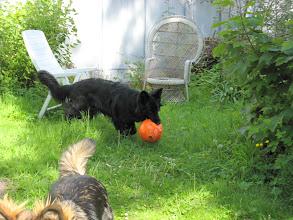 Photo: Lang zal die bal echter niet leven, zo te zien...