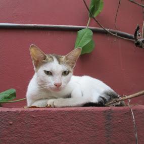 ID: The Meow Looks  by Shibalik Choudhury - Animals - Cats Portraits ( cat, adventure, nature, domestic_animal, portraits, animal_behaviour, animal, eye,  )