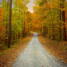Autumn Pathway by Karen Carter Goforth - Uncategorized All Uncategorized ( autumn, fall, path, trees, road,  )