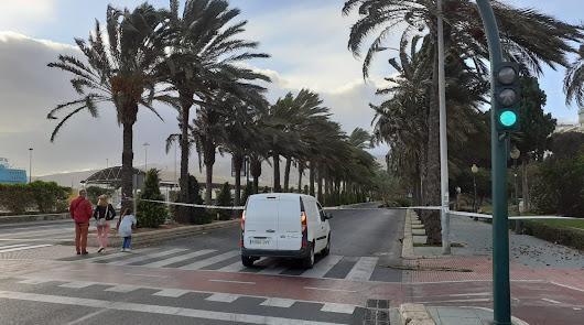 La caída de cuatro palmeras obliga a cortar el tráfico en la Vía Parque