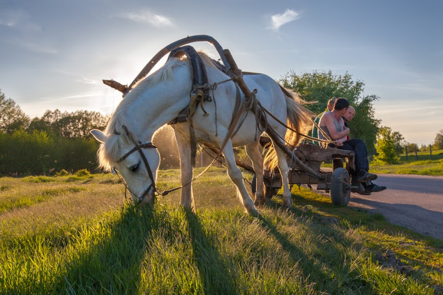 Village theme by Michael Shmelev - Animals Horses