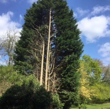 Tree climbing | Worcestershire