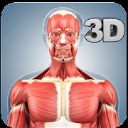 Muscle Anatomy Pro.