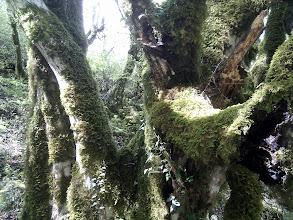 Photo: in the jungle