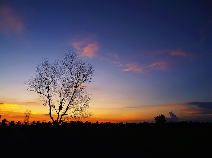Senja di Handil Suruk by Ferdi Vesa - Landscapes Prairies, Meadows & Fields
