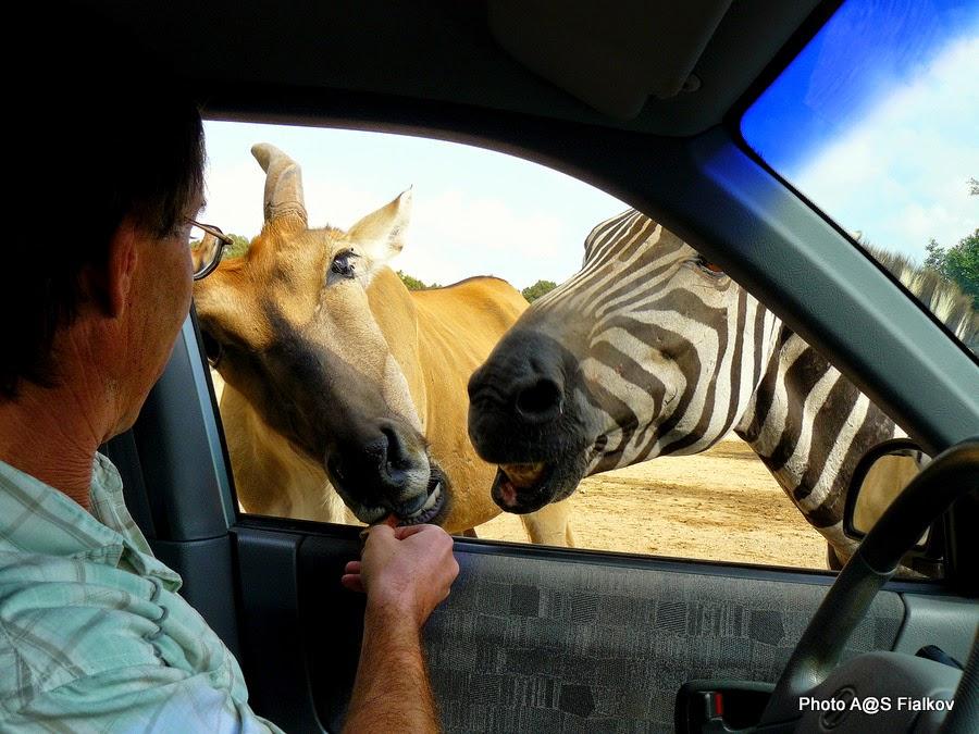 Зоопарк Сафари. Экскурсия Тель-Авив – Яффо - Сафари. Гид в Израиле Светлана Фиалкова.