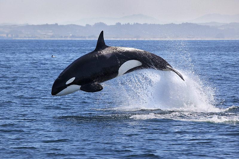 Fotografía: Aquarium Costa de Almeria