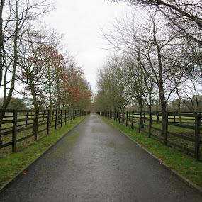 path Ireland by Catarina Cardoso - City,  Street & Park  City Parks