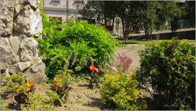 Photo: Glicina (Wisteria sinensis)  - din Turda, Parcul Catedralei Ortodoxe - 2019.06.28