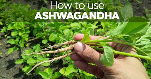 How to Use Ashwagandha for Cognitive Function and Improved Memory