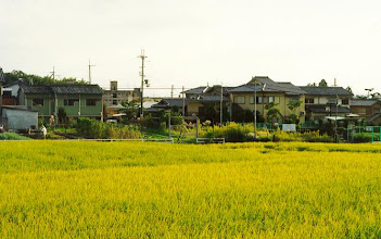 Photo: Walking around Nara l saw this rice field, which sort of is in the middle of the built up area, although not exactly in the centre of the city. That didn't seem to be very unusual in Japan.