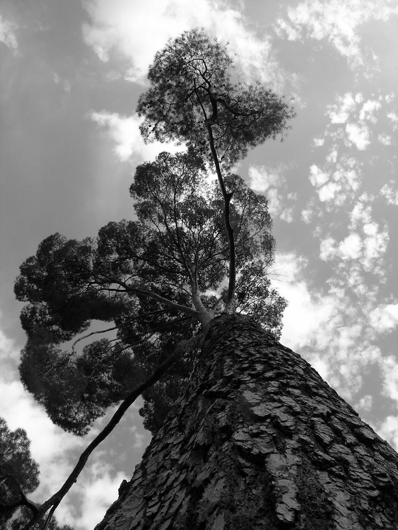 prospettive degli alberi di guido_galiasso