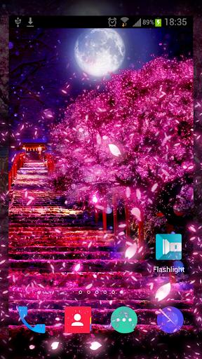 夜桜 HD ライブ壁紙