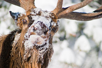 Photo: Brat with a face full of snow.