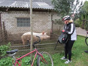 Photo: Maišiagalos kiaulė mama, nusipelniusi lauktuvių ir gavusi...