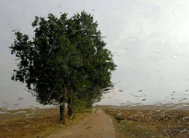 ...piove lento lento e fa freddo e tira il vento..... di Carla Roganti