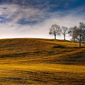 trees indian summer by Christoph Reiter - Landscapes Mountains & Hills ( clouds, hill, sky, autumn, colors, trees )