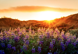 Photo: Flowers at Sunset - Taken with the Sony NEX-7   Speaking of the Sony NEX-7 (from the last shot) - I have an album here on G+ with a ton of photos in it that I took with this camera athttps://plus.google.com/photos/105237212888595777019/albums/5805669813661838625