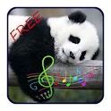 Sleep Therapy Free