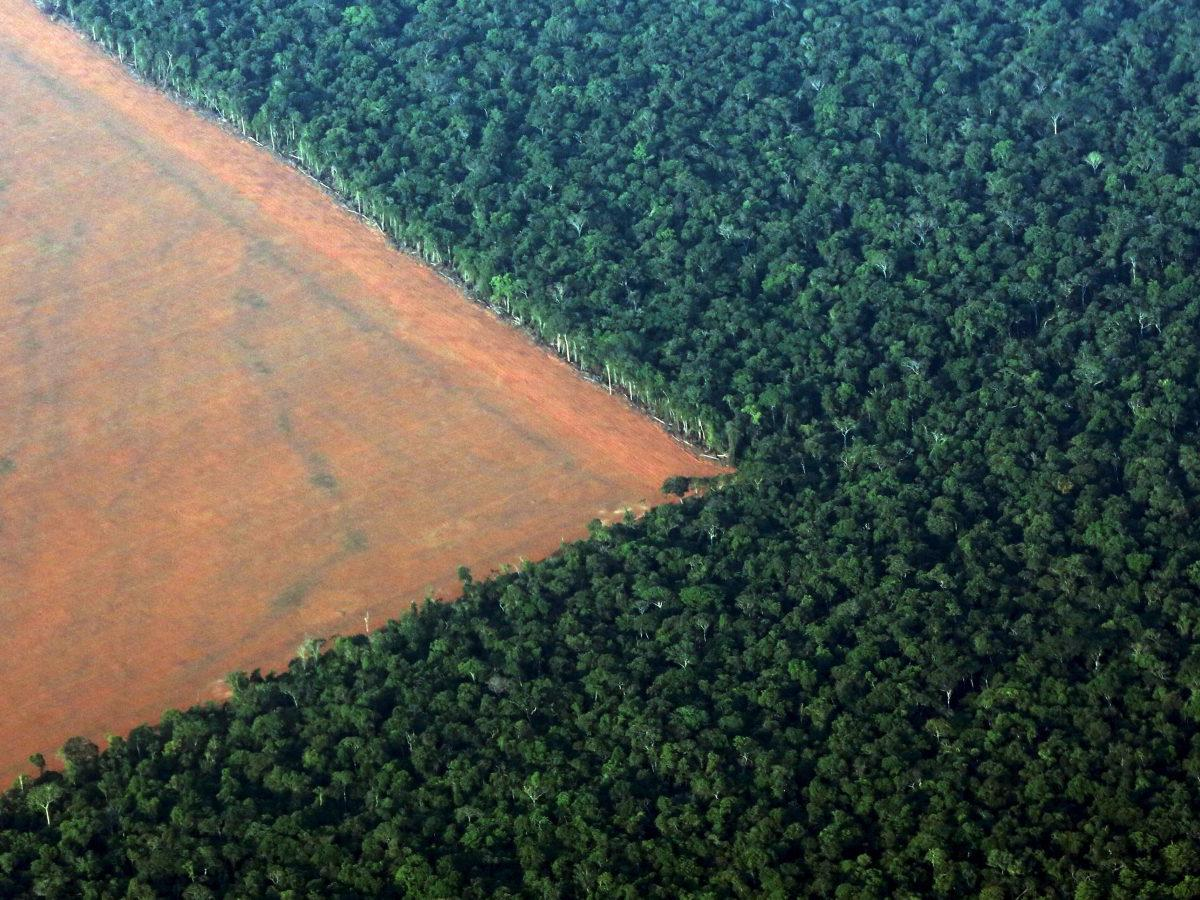Companies responsible for the world's deforestation don't even know which  forests they're destroying — Quartz