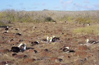 Photo: Albatross Love