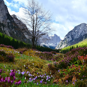 Pomlad v Krmi by Bojan Kolman - Landscapes Mountains & Hills (  )