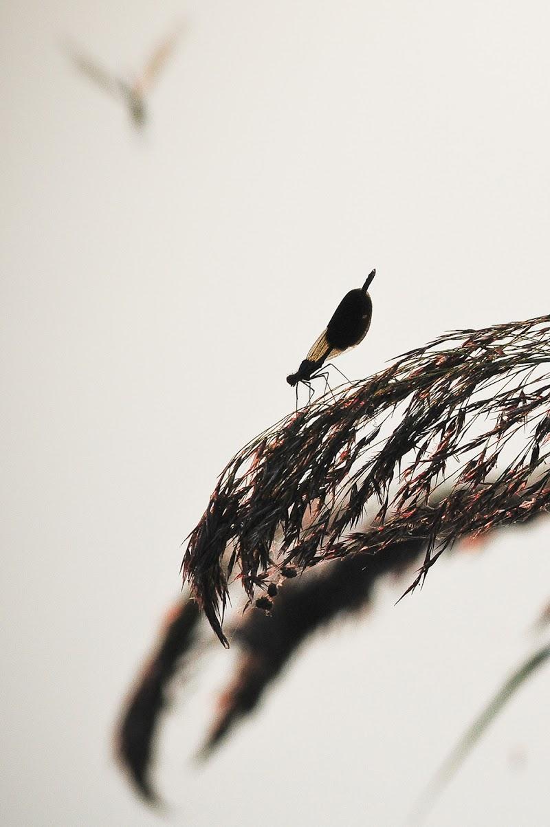 Libellule di Pier Gatti photography