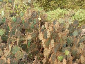 Photo: cactus en fleur