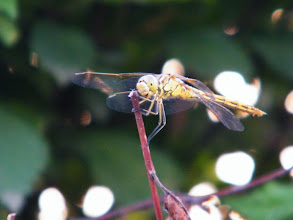 Photo: beautiful still life among benzrad 朱子卓's blogging. he finds funs in the dorm's garden. here a dragonfly.