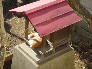 Photo: 2004年01月18日 ひなたぼっこ  昨日の雪模様がうそのように晴れた日曜日 家の外では猫が氏神様の社でお昼寝・・・ なんだかうらやましい。
