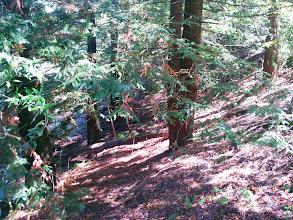 Photo: Under the redwood grove