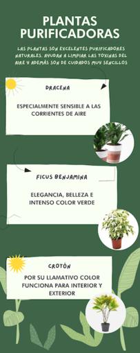 Infografía de Canva