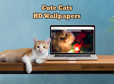 Cute Cats & Kittens Wallpapers HD Cat New Tab