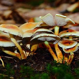 Mushroom n00055 by Gérard CHATENET - Nature Up Close Mushrooms & Fungi