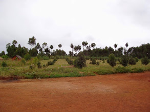 Photo: Plantation, partie nord, 2009