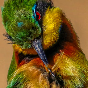 Feathering by JD Lotz - Animals Birds (  )