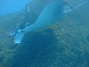 Photo: Manta cleanning station