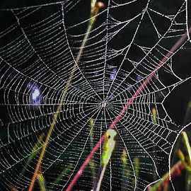 Spider Web 2 by Dee Haun - Nature Up Close Webs ( close up, nature, web, 180613t2648d2e2, spider, dark background )