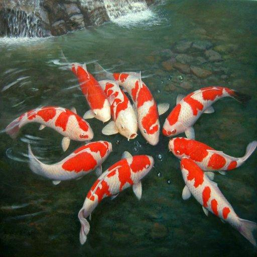 Japanese Pond Koi Wallpapers