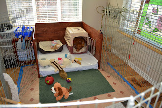 Photo: Daytime play area set up. Akela not in here yet, letting Lila get use to having the toys and other dogs around. She has decided she wants the crate.