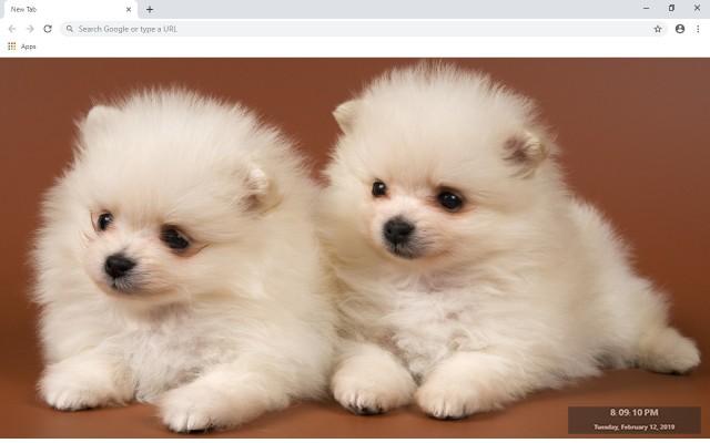 Puppies Full HD Custom New Tab