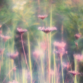 Flower dreams by Karen Beasley - Nature Up Close Other plants ( wildflowers, purple flowers, sunshine, hazy, soft )
