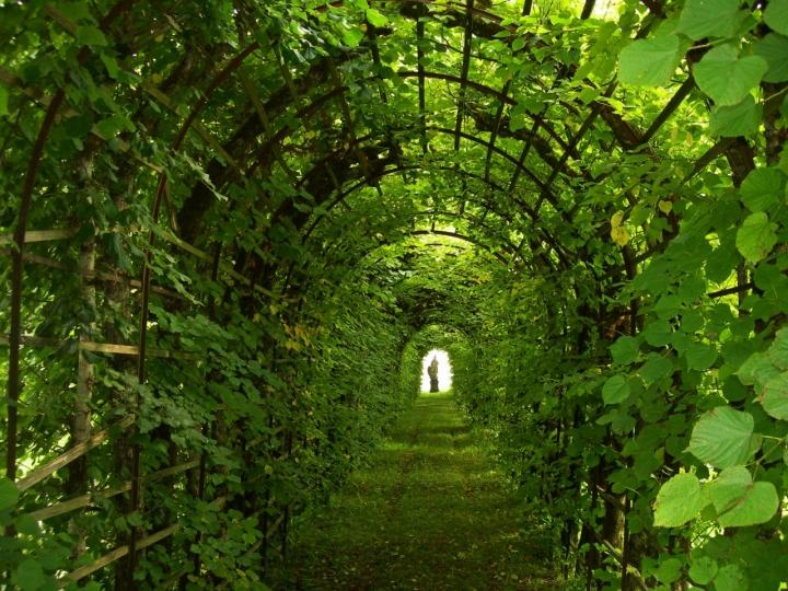 Green tunnel di lady oscar