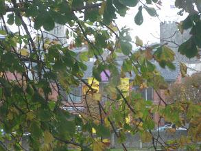 Photo: Enniscorthy - zza liści wyłania się wieża zamkowa