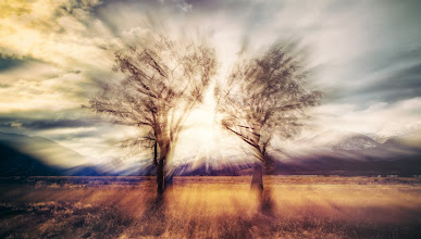 Photo: Two Trees in New Zealand near Glenorchy