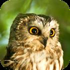 Owl Sounds icon