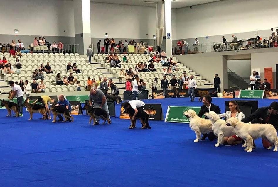"""Exposição elege cão de água português """"Best in Show"""""""