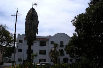 Photo: A palm tree with a stunted crown, Santa Barbara, CA, July 15, 2012.