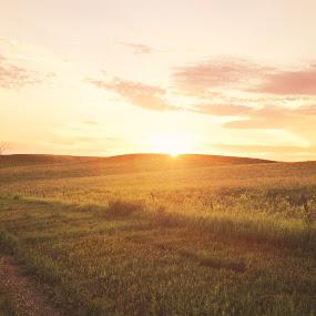 Rest by Chris Timmerman - Landscapes Prairies, Meadows & Fields ( field, dirt road, road, landscapes, nebraska,  )