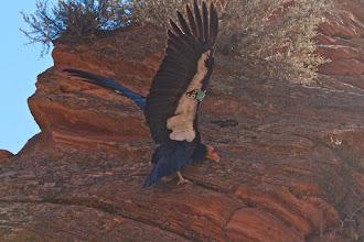 Photo: Zion Angels Landing Hike 86